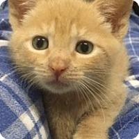Adopt A Pet :: Crush - Long Beach, NY