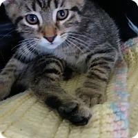 Adopt A Pet :: Moxie - Fairborn, OH