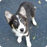 Adopt A Pet :: Maggie Mae - COLUMBUS, OH