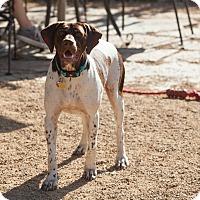 Adopt A Pet :: Guinness - Buena Park, CA