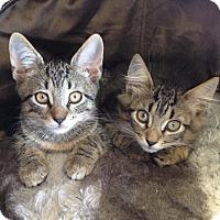 Adopt A Pet :: Olivia - Horsham, PA