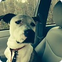 Adopt A Pet :: Sherlock - Atlanta, GA
