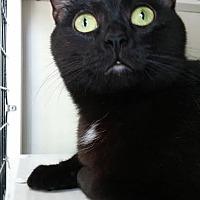 Adopt A Pet :: Rosalie - La Grange Park, IL