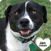 Adopt A Pet :: 278580 Jan - San Antonio, TX