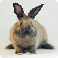 Adopt A Pet :: Coriander - Los Angeles, CA