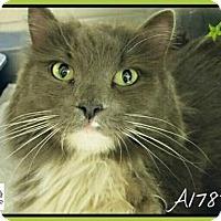 Adopt A Pet :: Innsbruck - Glendale, AZ