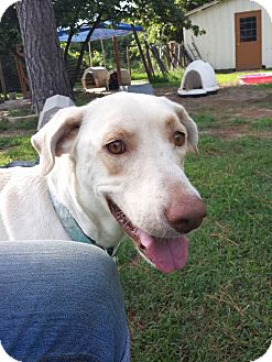 Adopt A Pet :: Chloe  - Snow Hill, NC