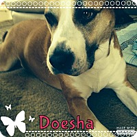 Adopt A Pet :: Doesha - Rowlett, TX