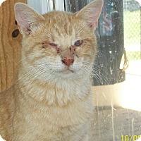 Adopt A Pet :: Hans - Mexia, TX