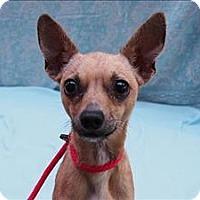 Adopt A Pet :: Zhang - Portland, OR