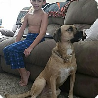 Adopt A Pet :: Jayda - Newtown, PA