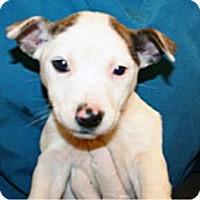 Adopt A Pet :: Sarabi - Wildomar, CA
