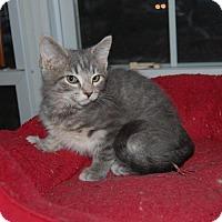 Adopt A Pet :: St. Sebastian - Fishers, IN
