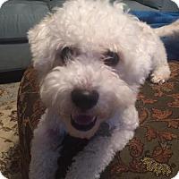 Adopt A Pet :: Maggie2 - Spring, TX