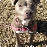 Adopt A Pet :: 1610-0753 Zeus - Virginia Beach, VA