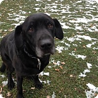 Adopt A Pet :: Zach - Island Lake, IL