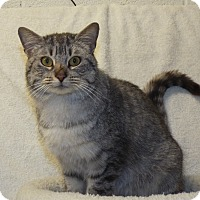 Adopt A Pet :: Mrs. Claws - Shelby, MI