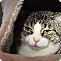 Adopt A Pet :: Romeo - Seattle, WA