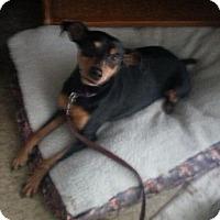 Adopt A Pet :: Robbie - Holland, OH