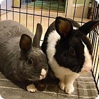Adopt A Pet :: Olive and Duffy - Moneta, VA