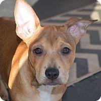 Adopt A Pet :: Ben - Allen town, PA
