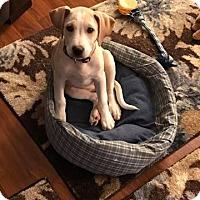 Adopt A Pet :: Spice - Burlington, NJ
