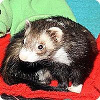 Adopt A Pet :: Elizabeth - Buxton, ME