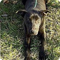 Adopt A Pet :: Sidney - Moulton, AL