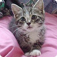 Adopt A Pet :: Brenna - Germansville, PA