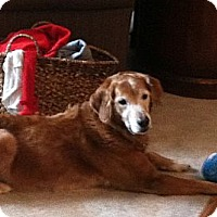 Adopt A Pet :: Harley Jane - Jacksonville, FL