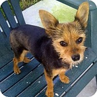 Adopt A Pet :: Lila - Miami, FL