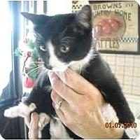 Adopt A Pet :: Pepepr - Riverside, RI