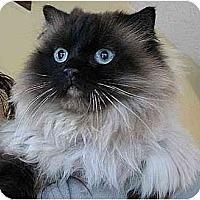 Adopt A Pet :: Rosanadana - Davis, CA