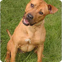 Adopt A Pet :: Cody - Chicago, IL