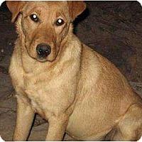 Adopt A Pet :: Natty - Glenpool, OK