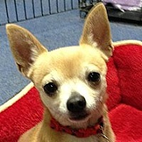Adopt A Pet :: Beau - Phoenix, AZ