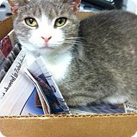 Adopt A Pet :: Smitten - Trevose, PA
