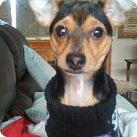 Adopt A Pet :: Yoda - Ocean Ridge, FL