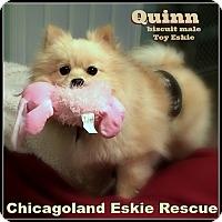 Adopt A Pet :: Quinn - Elmhurst, IL