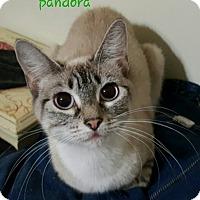 Adopt A Pet :: Pandora - McDonough, GA