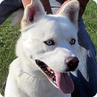 Adopt A Pet :: Kerr - Germantown, MD