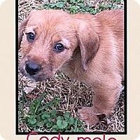 Adopt A Pet :: Cody (ETAA) - Harrisonburg, VA