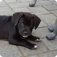 Adopt A Pet :: Clark - Westminster, MD