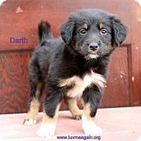 Adopt A Pet :: Darth - Bloomington, MN