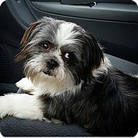 Adopt A Pet :: Bandit Turner - Urbana, OH