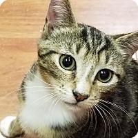 Adopt A Pet :: Stillman - Trevose, PA