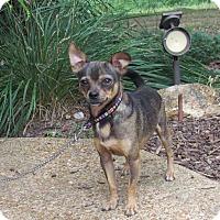Adopt A Pet :: JAKE - Hartford, CT
