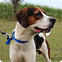 Adopt A Pet :: Gunner - Dillsburg, PA