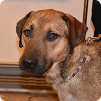 Adopt A Pet :: Buster - Lebanon, ME