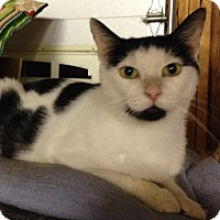 Adopt A Pet :: Cricket - Salem, NH